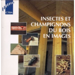 Photos d'insectes xylophages