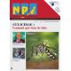 N&Pi Dom-Tom